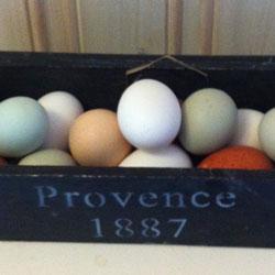 Ägg med olika färger